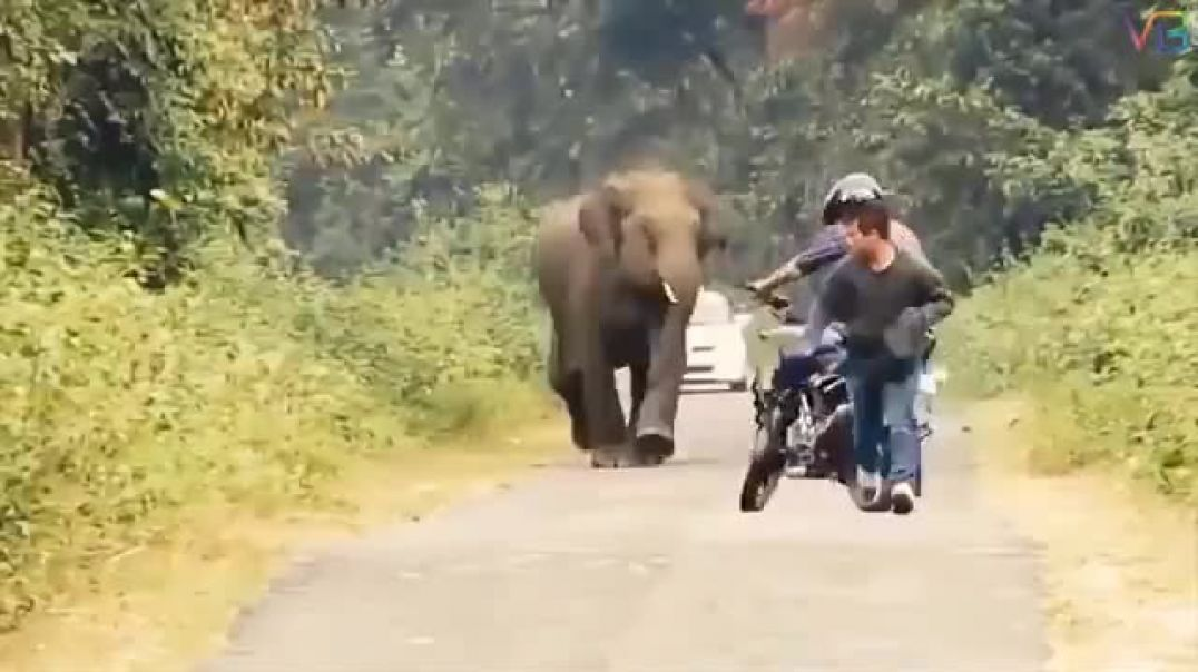 Whole lot of Karma going on - Animal Chases