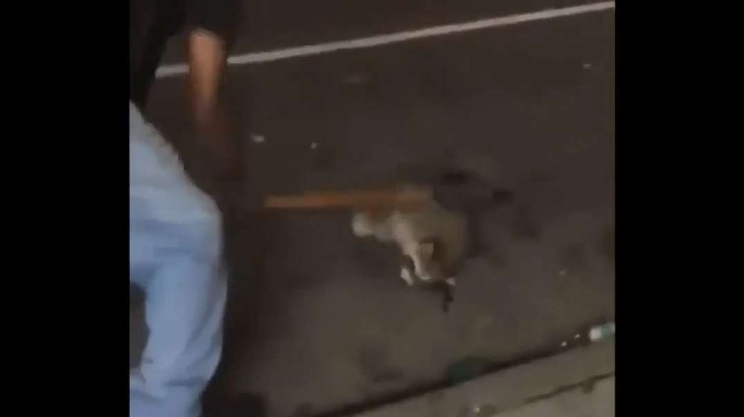 Coons give racist raccoon wood to build a dam