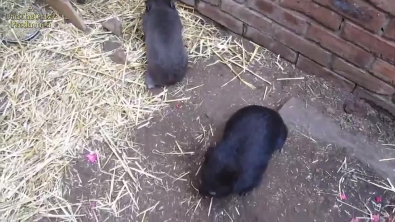 Meanwhile in Australia Ep20 pet baby wombats