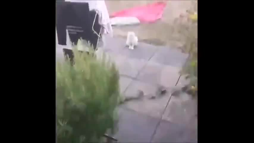 Cats Are Cunts ep44 weird looking cat