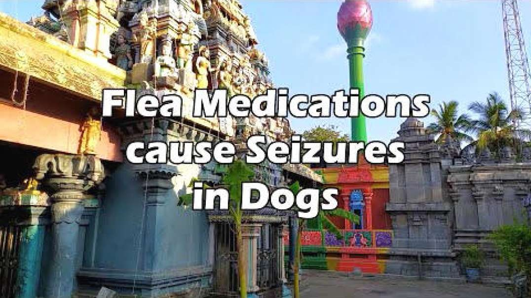 Flea Medications Cause Seizures in Dogs