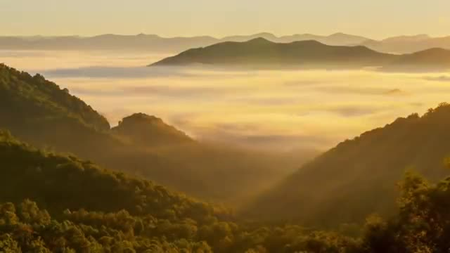 Great Smoky Mountains - Staggering Biodiversity in America's most visited National Park