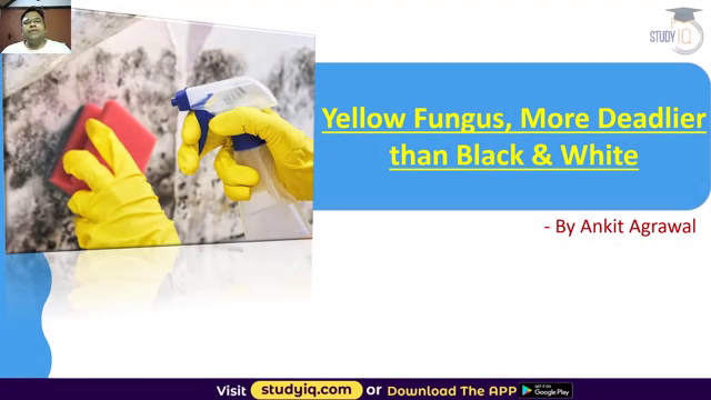 Yellow Fungus Disease in India - Why it is more dangerous than Black Fungus and White Fungus Disease Source: study IQ education