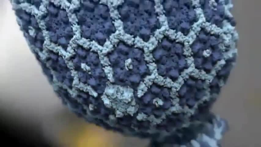 Bacteria, Parasites, and Virus Fear Mongering - The Hidden Truth on Bacteria, Parasites and Viruses