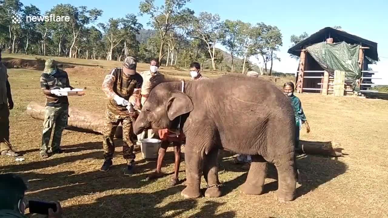 Can you beleive this? Elephants tested for COVID-19 after lions test positive in Indian zoo. I bet it was the curry!!
