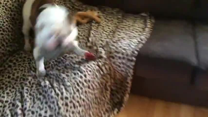 Dog Likes His Toy