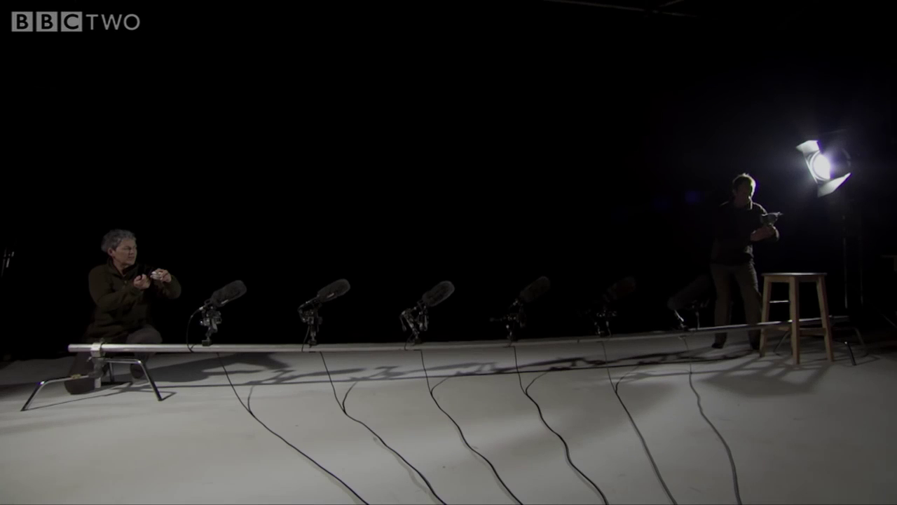 Owls make almost no noise when flying, even when tested in a room with multiple microphones.