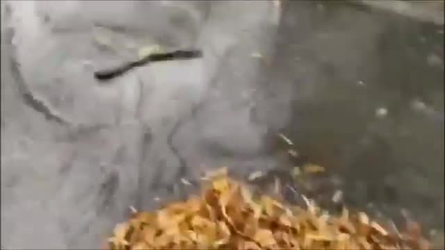 Violent storms struck this morning between Imola and Forli Cesena _ V